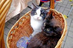 Due gattini in un canestro Fotografie Stock