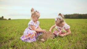 Due gemelli affascinanti delle sorelle si divertono su un prato verde con coniglio lanuginoso video d archivio