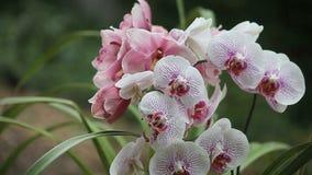 Due generi di orchidee video d archivio