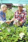 Due giardinieri Fotografia Stock Libera da Diritti