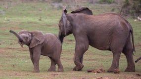 Due giovani amici degli elefanti Immagine Stock Libera da Diritti