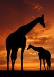 Due giraffe Immagine Stock