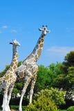 Due giraffe della fauna selvatica circondate dalla natura Fotografia Stock Libera da Diritti