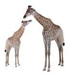 Due giraffe geometriche, isolate su fondo bianco Immagini Stock Libere da Diritti