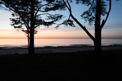 Due grandi alberi sui precedenti di un tramonto vicino al mare Immagini Stock