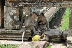 Due grandi scimmie con due bambini Fotografie Stock Libere da Diritti