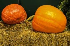 Due grandi zucche mature sulla balla di fieno Fotografia Stock