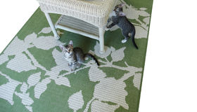 Due Gray Tabby Kittens e una Tabella di vimini Fotografia Stock