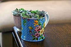 Due hanno colorato le tazze con le piante stanno sull'orlo della tavola immagine stock libera da diritti
