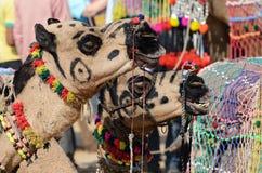 Due hanno decorato i cammelli tribali al festival del bestiame, India del nomade Fotografia Stock