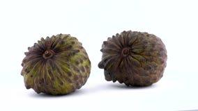 Due interi frutti maturi dell'annona stanno girando sulla piattaforma girevole isolata sui precedenti bianchi Fine in su video d archivio