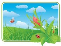 Due ladybugs sul selvaggio sono aumentato Fotografia Stock Libera da Diritti