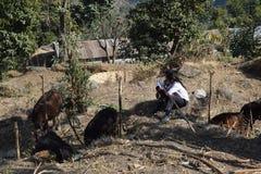 Due libri di lettura dello studente del villaggio in Solukhumbu Immagine Stock