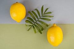 Due limoni maturi e una foglia verde su un backgrou pastello blu-verde Fotografia Stock Libera da Diritti