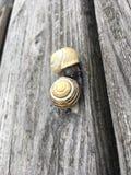 Due lumache che baciano su una scatola grigia di legno fotografia stock