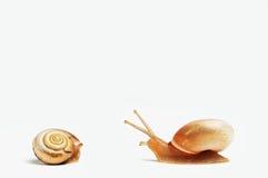 Due lumache divertenti Fotografia Stock Libera da Diritti