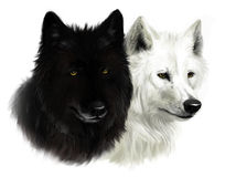 Due lupi illustrazione di stock
