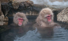 Due macachi in una prefettura di Nagano della sorgente di acqua calda, Giappone Fotografie Stock Libere da Diritti