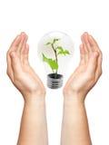 Due mani con la lampada Immagine Stock
