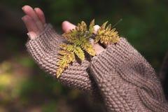 Due mani in guanti che tengono uno strato giallo Fotografia Stock