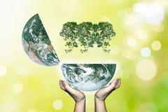 Due mani tengono il pianeta Terra che apre tre grandi alberi verdi con la b immagini stock