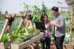 Due maschii e agricoltore femminile con il computer portatile Immagine Stock Libera da Diritti