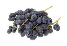 Due mazzi di uva nera Fotografia Stock Libera da Diritti