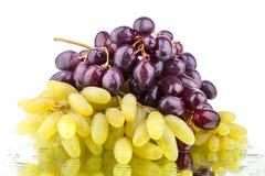 Due mazzi di uva rossa e bianca su un fondo bianco dello specchio con la riflessione e le gocce di acqua hanno isolato vicino su immagini stock