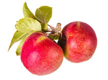 Due mele con le foglie Fotografia Stock Libera da Diritti