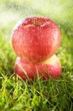 Due mele nella pioggia Fotografia Stock