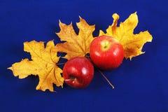 Due mele rosse e foglie di acero gialle su un fondo blu immagine stock
