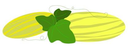 Due meloni prolungati con le foglie su un fondo bianco illustrazione vettoriale