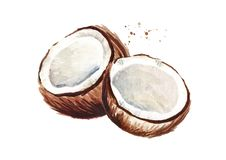 Due metà della noce di cocco Illustrazione disegnata a mano dell'acquerello, isolata su fondo bianco royalty illustrazione gratis