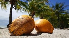 Due noci di cocco e palmtrees Fotografie Stock