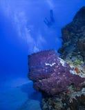 Due operatori subacquei e una grande spugna del barilotto Fotografia Stock Libera da Diritti