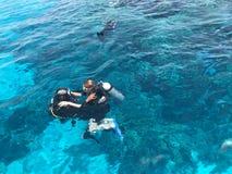 Due operatori subacquei nei vestiti neri di immersione con bombole, in un uomo ed in una donna con le bombole d'ossigeno affondan fotografia stock