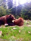 Due orsi bruni in natura Fotografia Stock Libera da Diritti