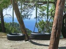 Due oscillazioni della gomma della gomma sugli alberi Bello paesaggio della montagna fotografia stock