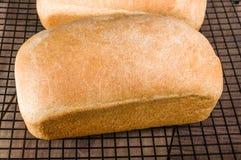 Due pagnotte di pane al forno fresco Fotografie Stock Libere da Diritti