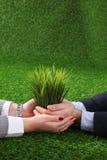 Due paia delle mani che tengono delicatamente plantula Immagini Stock Libere da Diritti