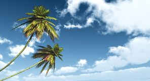 Due palme contro il cielo blu Immagine Stock