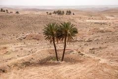 Due palme nel deserto Fotografie Stock Libere da Diritti