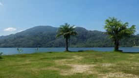 Due palme o alberi su un lago con le colline nel fondo Fotografia Stock