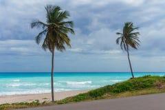 Due palme su un fondo del mar dei Caraibi azzurrato e del cielo piovoso grigio Fotografia Stock Libera da Diritti