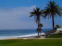 Due palme su una spiaggia Fotografia Stock