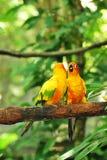 Due pappagalli Fotografia Stock Libera da Diritti