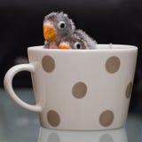 Due pappagalli del bambino, piccioncino, mostrante si dirige in una tazza adorabile Fotografie Stock