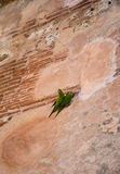 due pappagalli verdi ad una parete Fotografia Stock