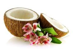 Due parti della noce di cocco matura con i fiori Fotografie Stock Libere da Diritti