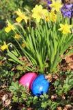 Due pasqua-uova davanti ad un narciso giallo Fotografia Stock Libera da Diritti